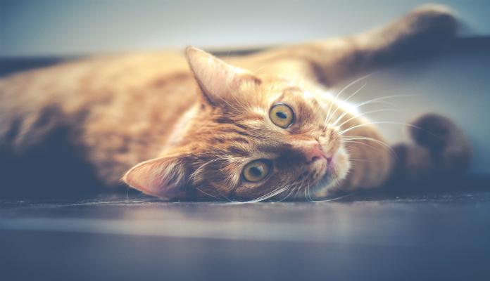 Lista de Medicações proibidas para gatos