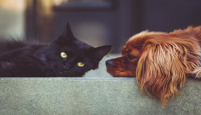 Mito ou verdade. Curiosidades sobre pets