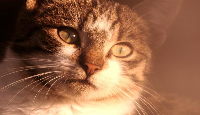 Assistir a vídeos de gatinhos reprime a ansiedade