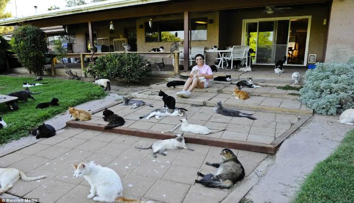 Cat house, o maior abrigo de gatos do mundo