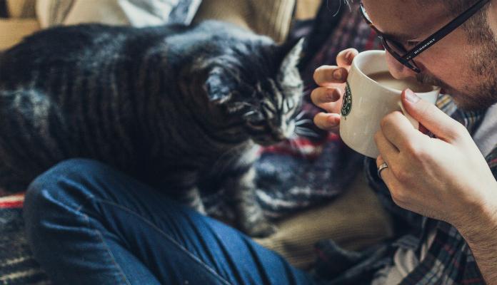 Gatos podem tomar leite?