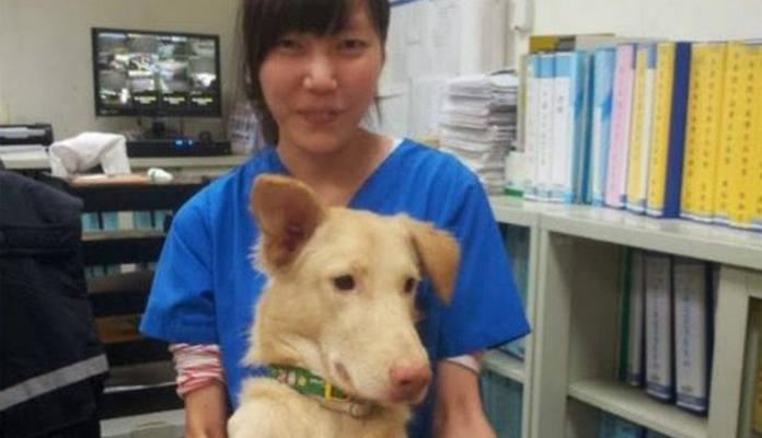 Veterinária se suicida após sacrificar centenas de cães em Taiwan