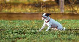 Curiosidades espetaculares sobre os cães