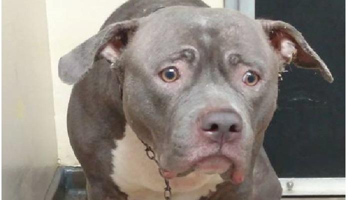Cadela Electra chora ao chegar em abrigo para adoção e comove internautas