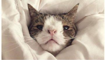 Gatos com Síndrome de Down que você simplesmente vai amar