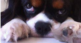 Emocionado, Miguel Falabella se despede do seu cãozinho Bruno no Instagram
