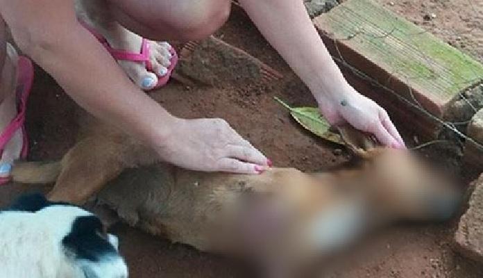 Homem mutila e mata cão em Iporá: foi preso, mas responde em liberdade