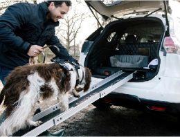 Já estava na hora: carro é desenvolvido para famílias com cães