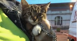 Moradora da Cracolândia só aceita internar encontrando lar para seu gato