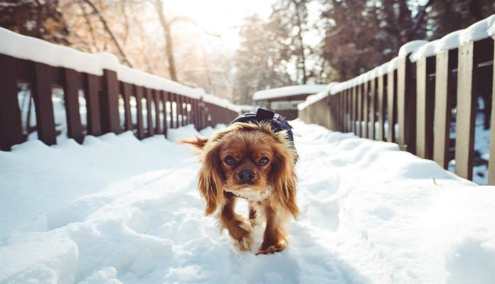 Gases em cães: O alimento pode ser a principal causa