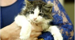 Gatinho arremessado em Brasília tem final feliz: ele é adotado e ganha nome