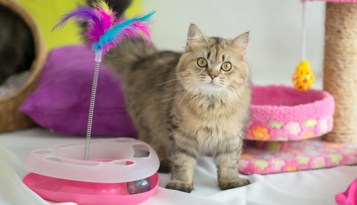 6 Dicas de como fazer brinquedos para o seu gato sem gastar muito