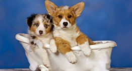 Banho e Tosa em Pet Shop é seguro? Como escolher o melhor!