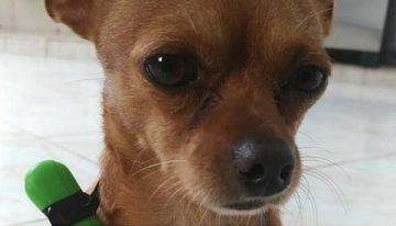 Estopinha, o cãozinho estressado que faz sucesso no Facebook