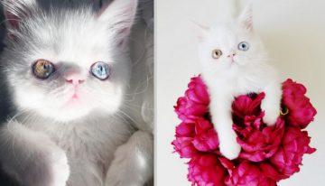 Miss Pam Pam, a gatinha que tem uma condição rara e tem conquistado o mundo
