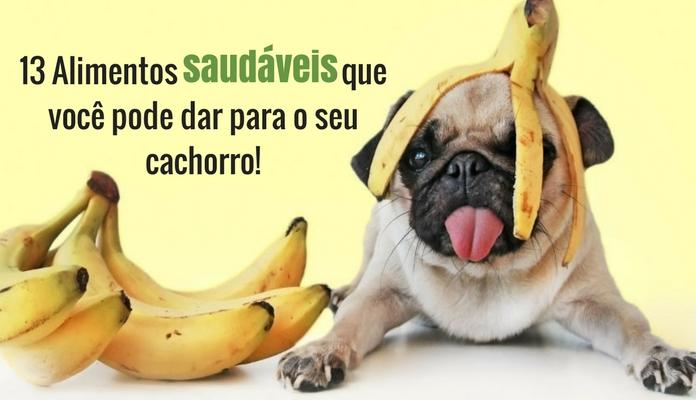 13 Alimentos saudáveis que você pode dar para o seu cachorro