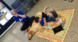 Cão ajuda menino com autismo a socializar