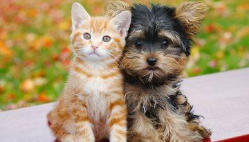 Câncer de pele em cães e gatos | Portal dos Cães e Gatos