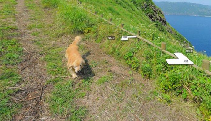 Cachorro segue carro do Google e aparece em várias imagens do Street View