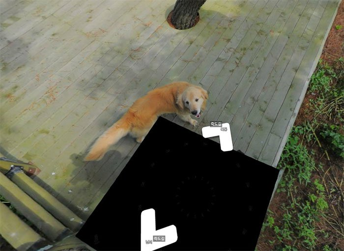 cachorro segue