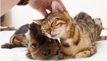 Por que cães e gatos gostam de cafuné e de coçar suas cabecinhas?