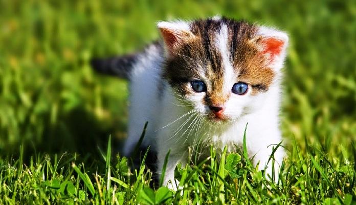 Serial Killer de animais? mais de 200 gatos são envenenados na França