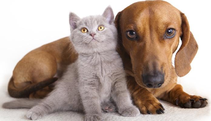 Qual é o mais inteligente? O gato ou o cachorro?