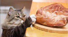 Será que funciona? bichanos gatunos podem se dar mal com robô anti-gatos