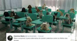 Juíza explica termos jurídicos na web ao usar memes de animais