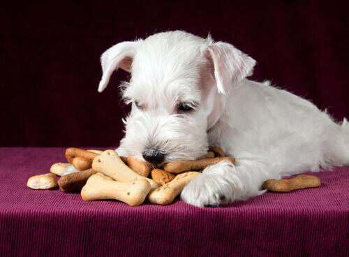 petiscos cão
