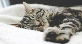 Sono: Por que os felinos dormem tanto?