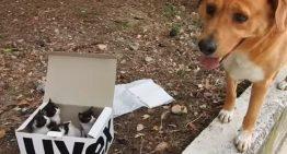 Cão resgata uma caixa com 4 gatinhos abandonados para morrer