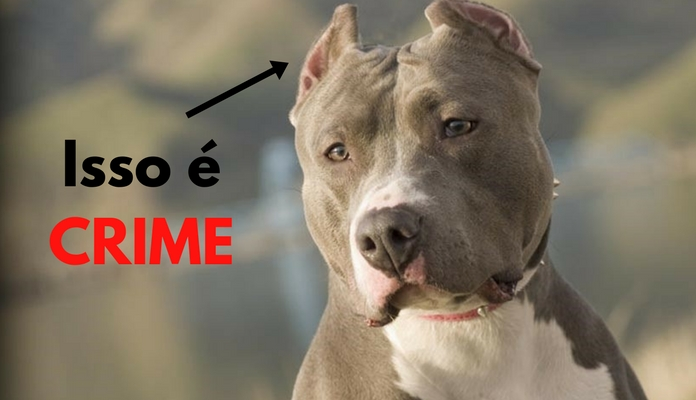Cortar orelhas e rabo de cachorro é crime | Portal dos Cães e Gatos