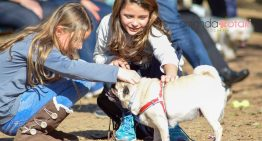 3° Encontro de Pugs em Porto Alegre | Portal Dos Cães e Gatos