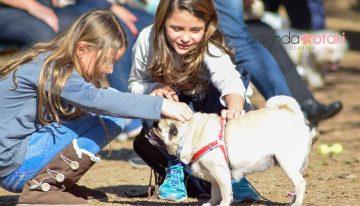 3° Encontro de Pugs em Porto Alegre   Portal Dos Cães e Gatos