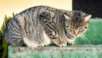Mulher morre ao entrar em contato com vírus raro transmitido pelo gato