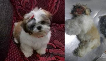 Tutora vai buscar cão em pet shop após banho e recebe animal morto