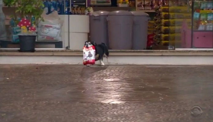 O cachorro Pituco que leva sua ração pra casa ao sair do pet shop