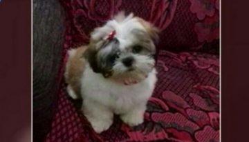 Laudo aponta o motivo da morte da cadelinha em pet shop