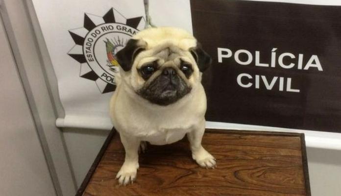 Cão roubado de dentro de casa é encontrado após oito meses
