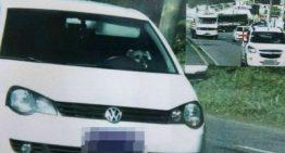 """Schnauzer é flagrado """"dirigindo"""" um Volkswagen Polo a 71 km/h"""