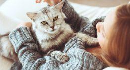 10 coisas que os gatos adoram fazer – Portal dos Cães e Gatos