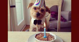 4 Receitas de bolo de aniversário que o seu cachorro vai adorar