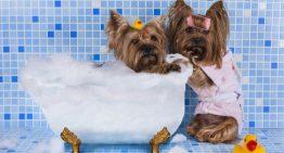 Com que frequência devo dar banho no meu cachorro?