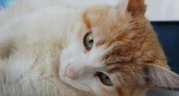 Idoso de 69 anos mata gato a pauladas: Veja o motivo
