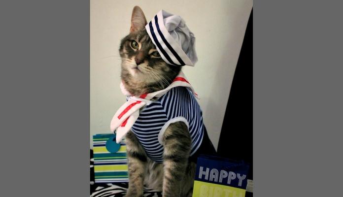 Vídeo: Conheçam Bispo Gaylord o gato que gosta de se vestir!