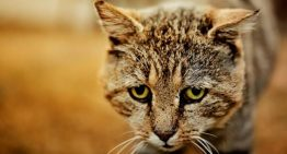 É possível DENUNCIAR maus-tratos a animais via telefone e internet