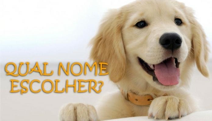 Mais de mil opções de escolha para dar um nome ao seu cachorro