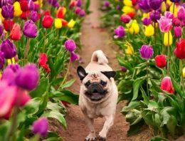 As plantas mais comuns e tóxicas que podem levar o seu pet à morte