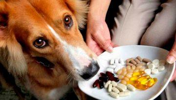 5 remédios que você não deve dar ao seu cachorro